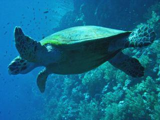 10 raisons de plonger