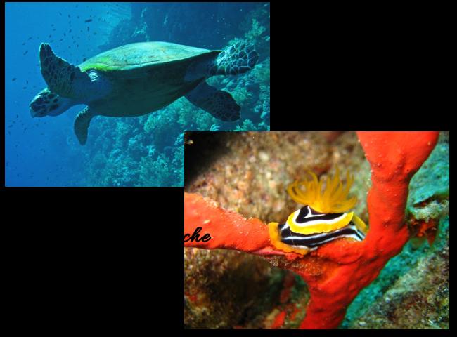 creatures sous-marines