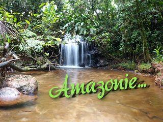 forêt tropicale, equateur