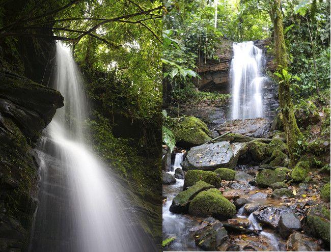 chute d'eau jungle