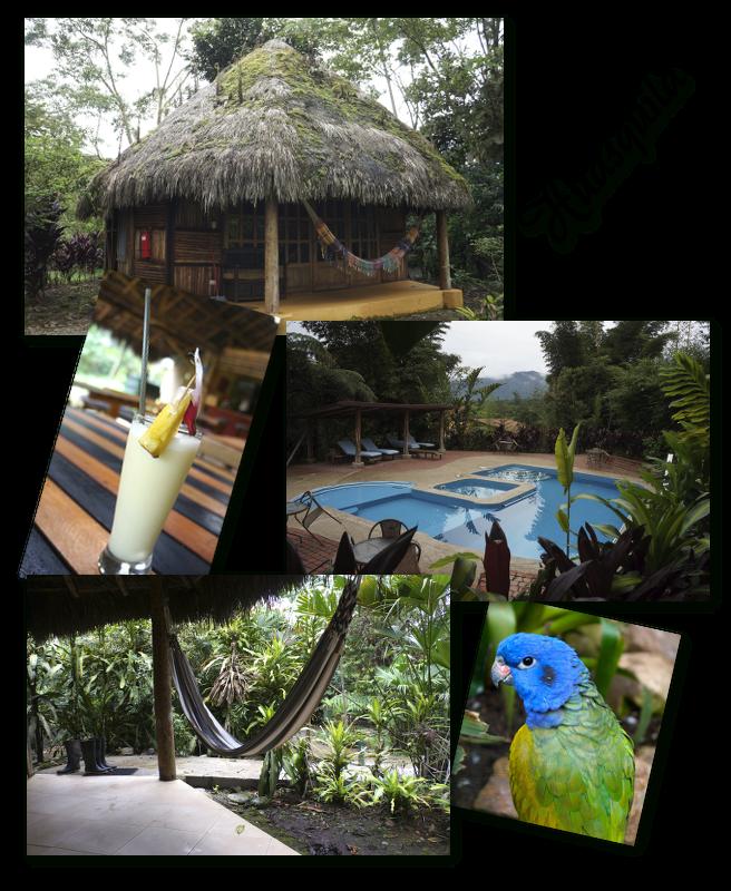 ecolodge en amazonie