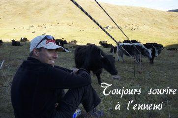 yak au tibet