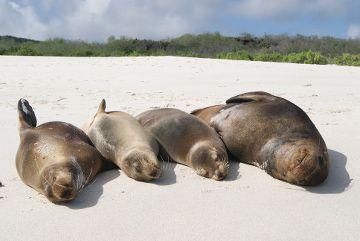 les iles galapagos