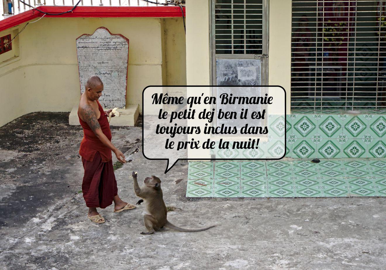singe et moine birmanie