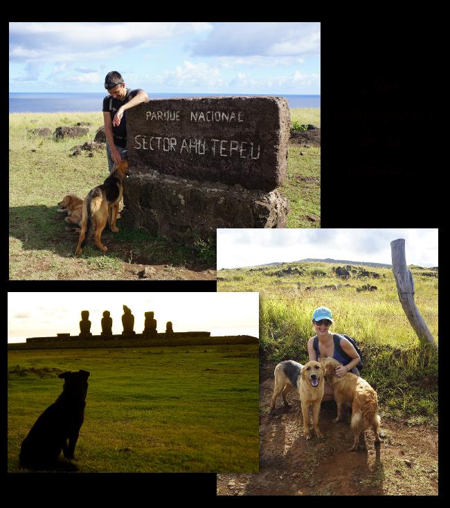 les chiens de l'îles de Pâques