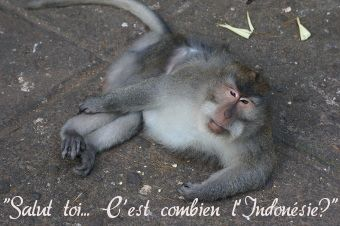 singe à Ubud