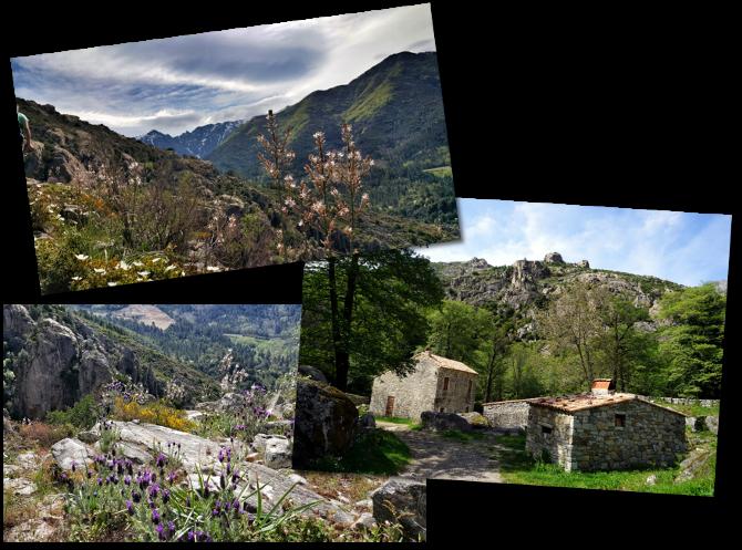 corsica in spring