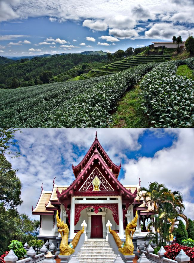 mae salong thailande