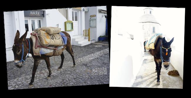 ânes à santorin