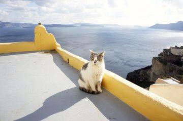 chat avec vue sur la mer
