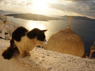 chat abandonné santorin