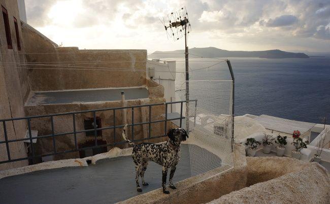 dalmatien en terrasse