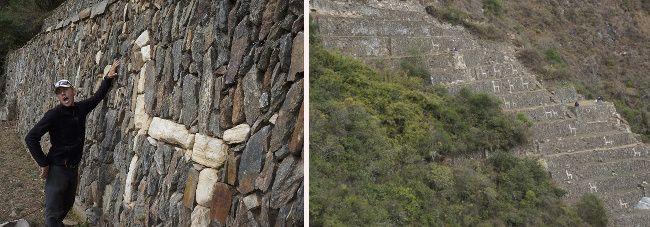 lama dans les ruines