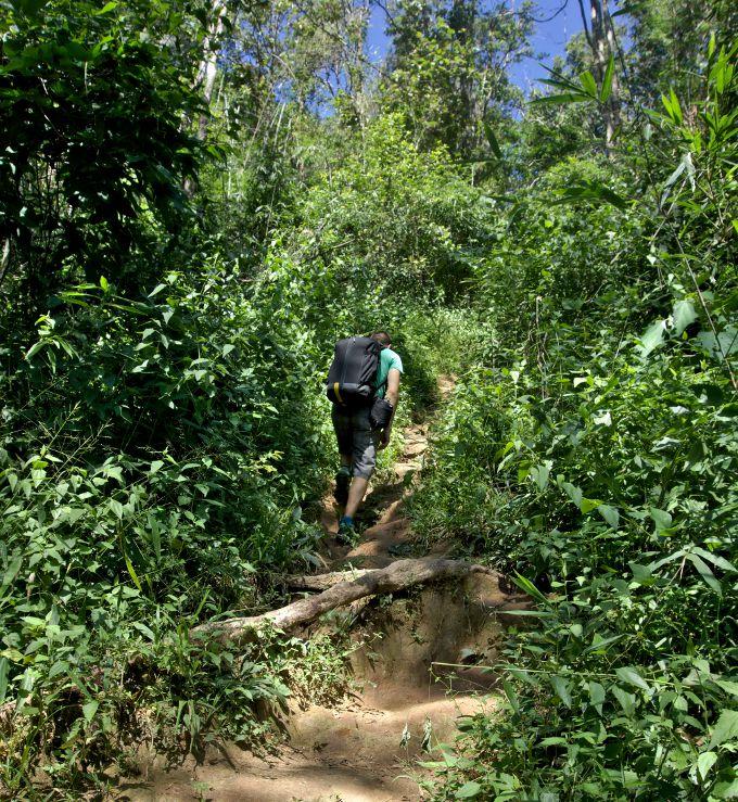 raide sentier dans la jungle