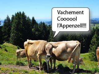 vache appenzelloise
