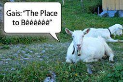 chèvre appenzelloise