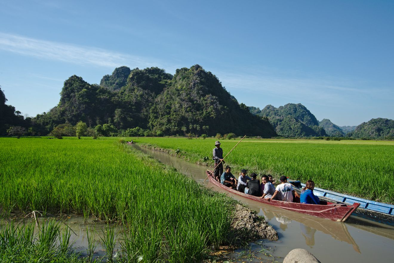 saddan rice fields