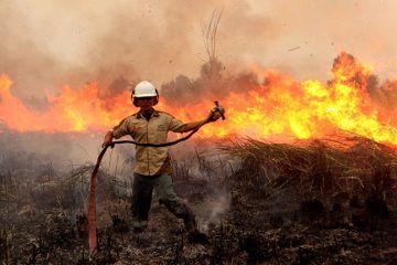 feux de foret indonesie