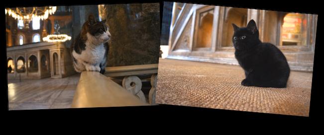 chat d'hagia sofia