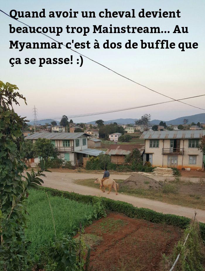 un homme sur son buffle au Myanmar