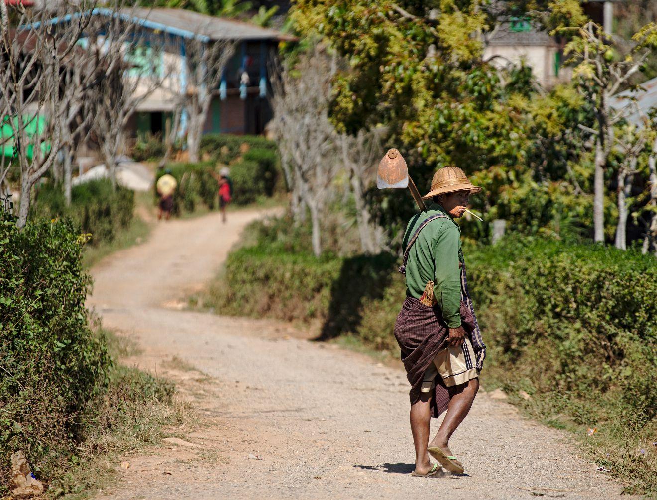 birman partant au travail aux champs
