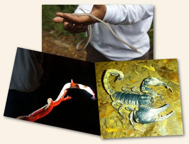 serpents et scorpions en Thailande
