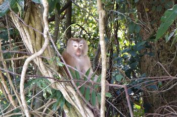 singe dans la jungle