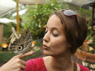 papillons d'Equateur