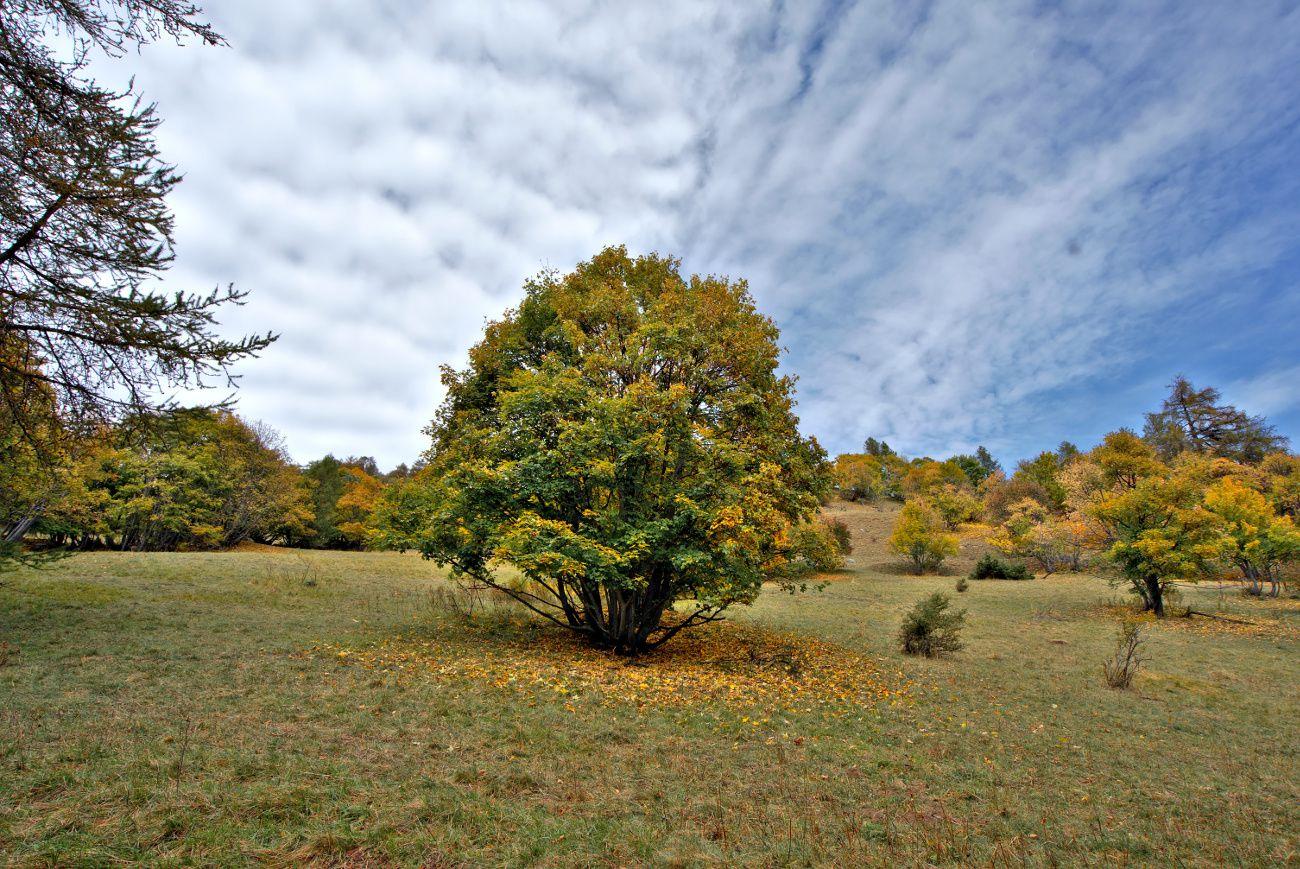 le val d'allos en automne