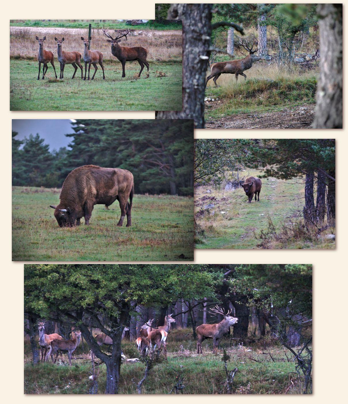 Réserve de bisons des Monts d'Azur