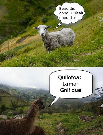 mouton equateur
