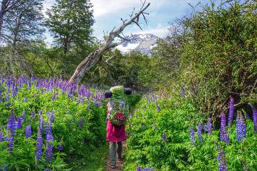 patagonie printemps