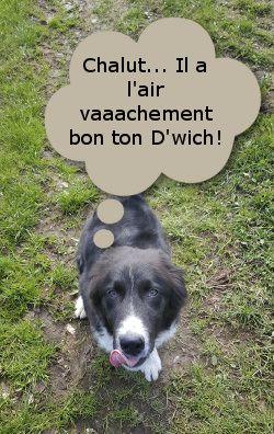 chien suisse en randonnée