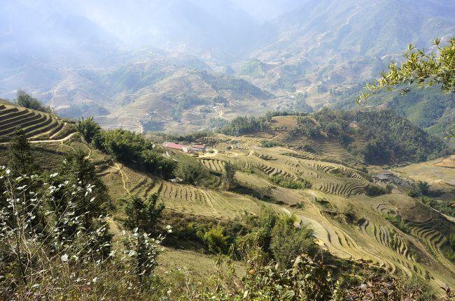 Les rizieres en terrasses de Sapa