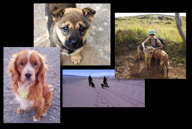 chiens errants en voyage
