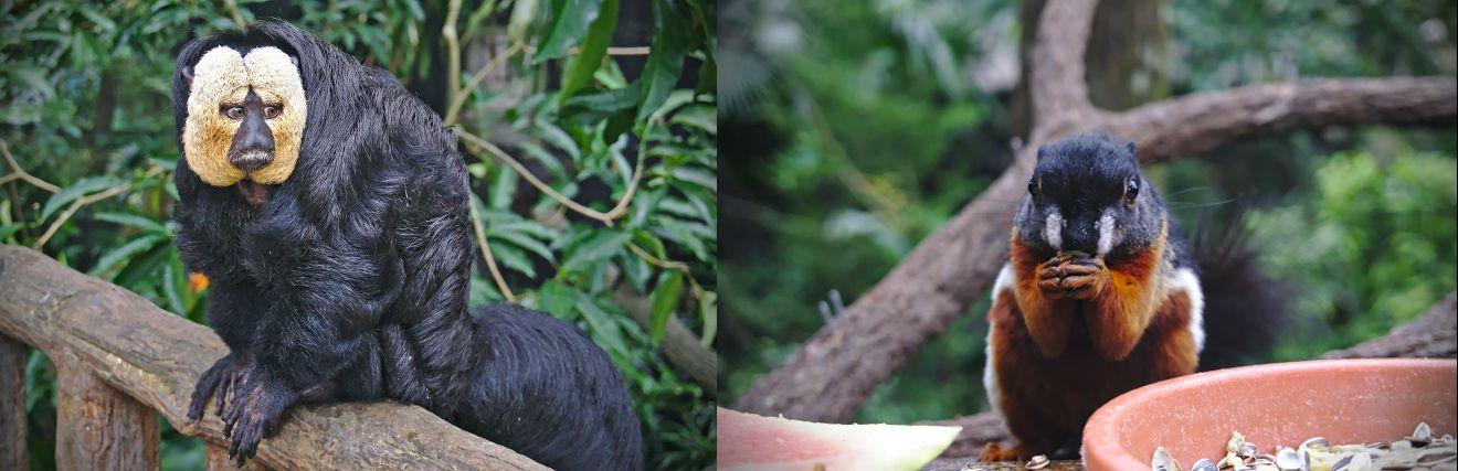 singe et écureil au zoo de Singapour