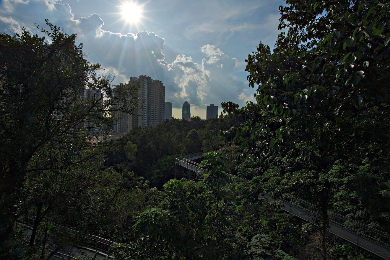 southern ridge walk, singapour