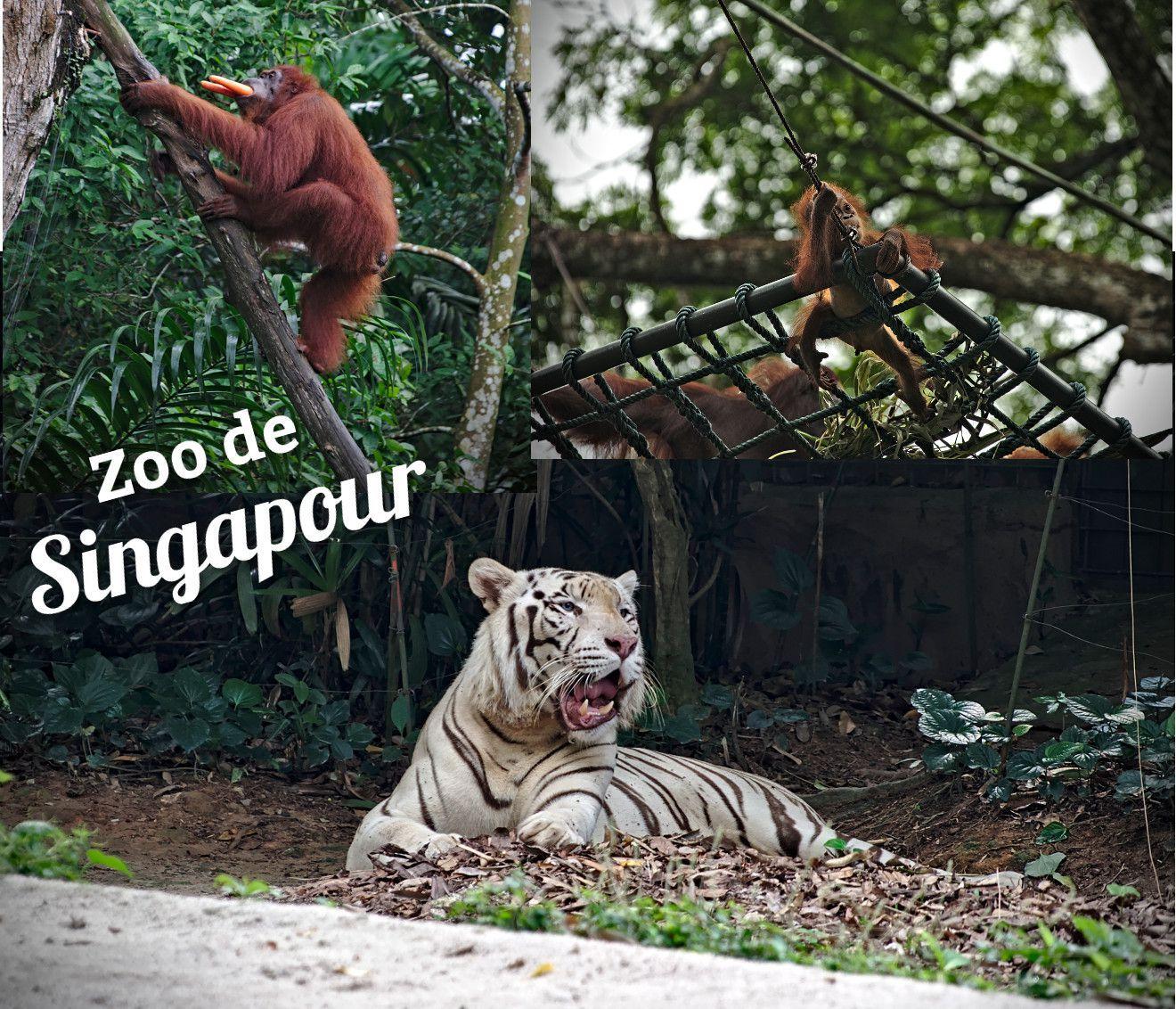 animaux du zoo de Singapour