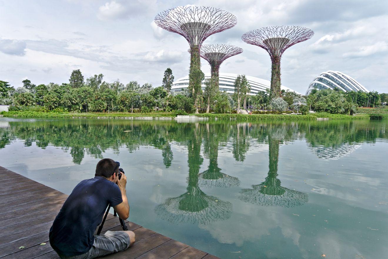 les arbres de singapour