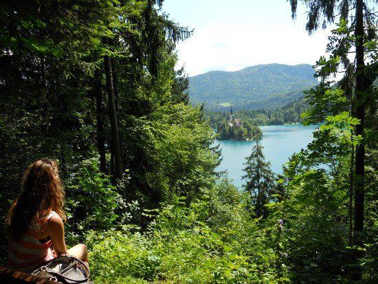 forêt Bled