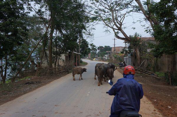 les animaux sur la route