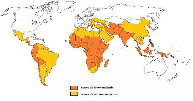 vaccin typhoïde
