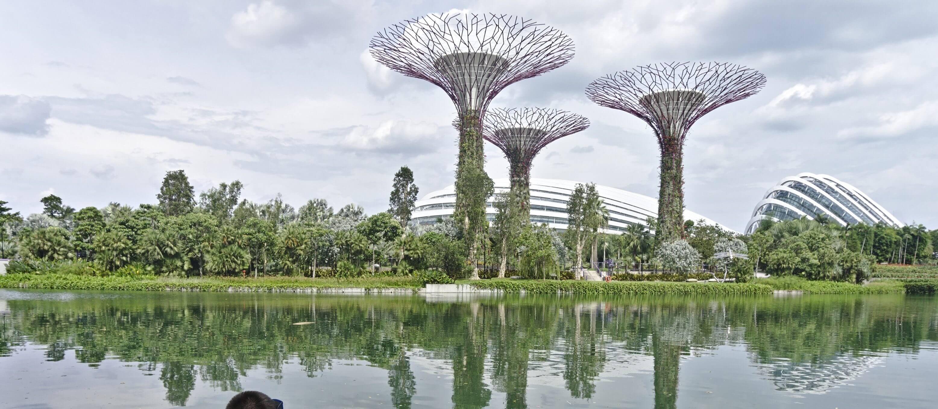 arbres de singapour