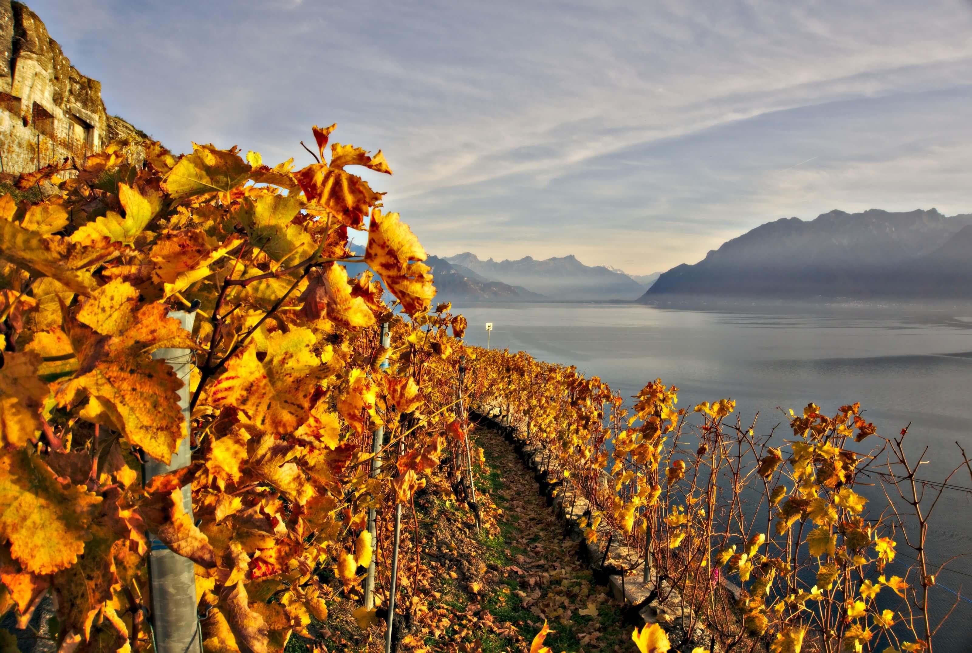 région du lavaux, Vaud