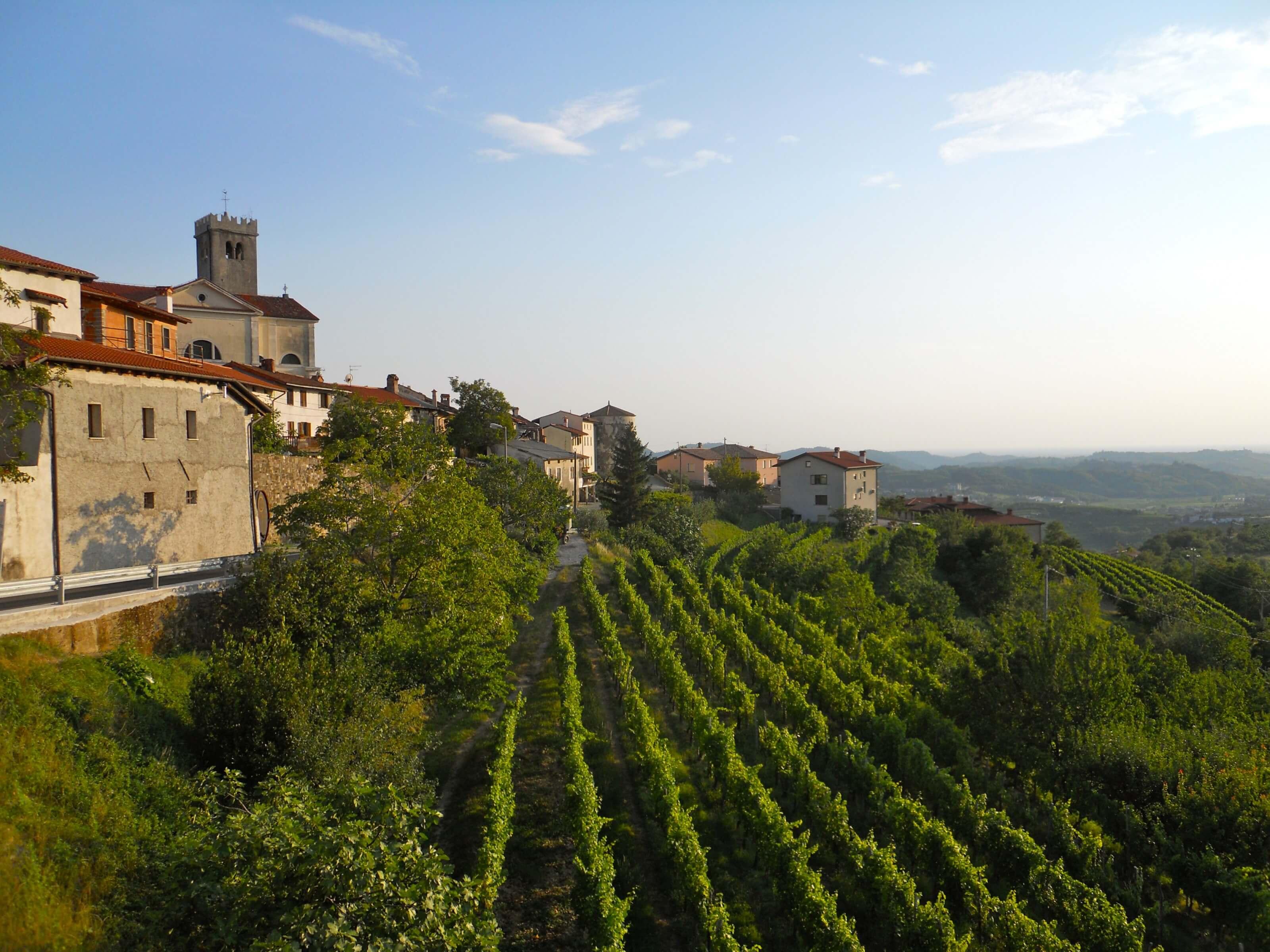 vignes slovènes