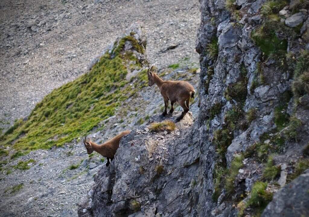 chamoix dans les alpes