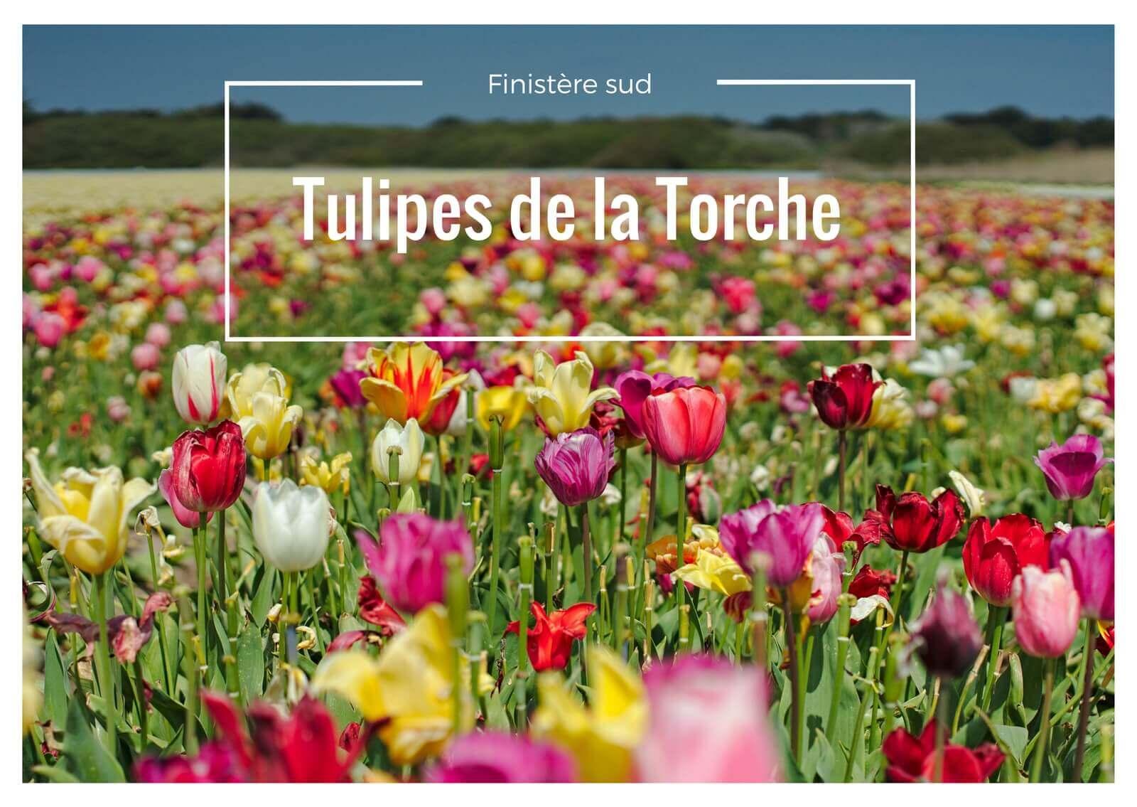 les tulipes de la torche