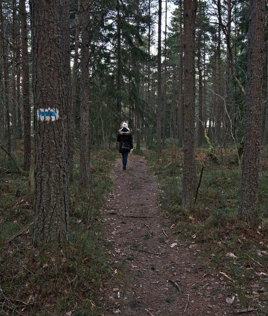 forêt tallinn