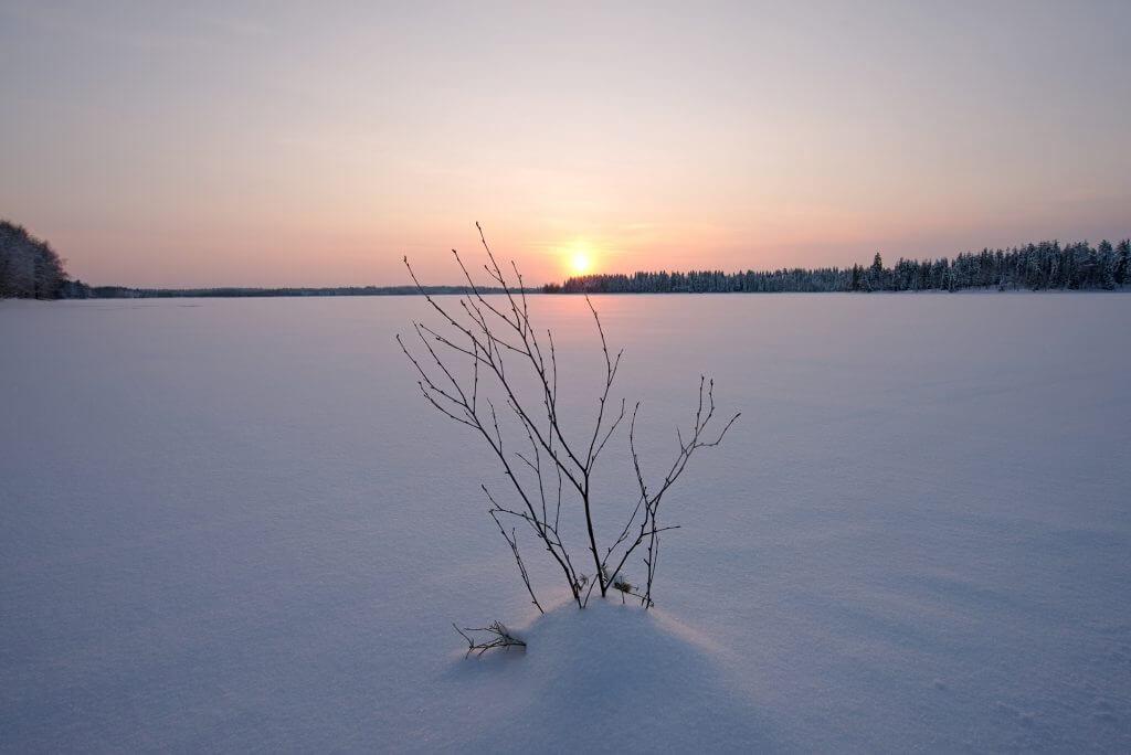 branche lac gele