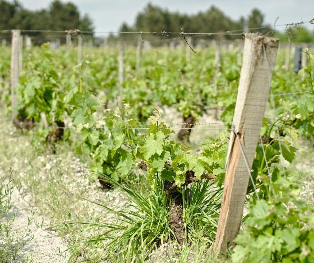 vignobles bordeaux